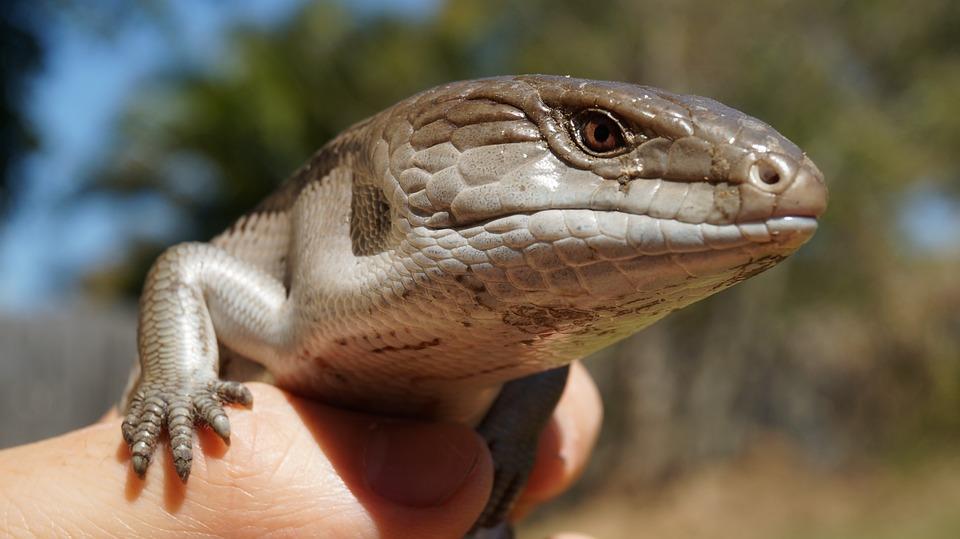 Low maintenance pets | Lizards | Beanstalk Mums