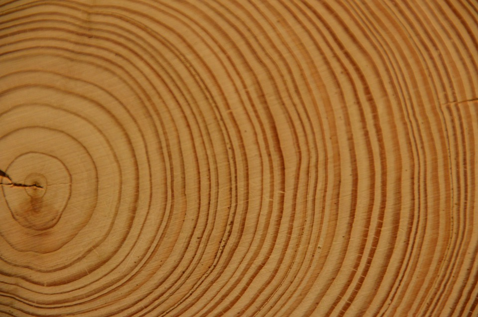 Kostenloses Foto Holz Jahresringe Baum Baumstamm
