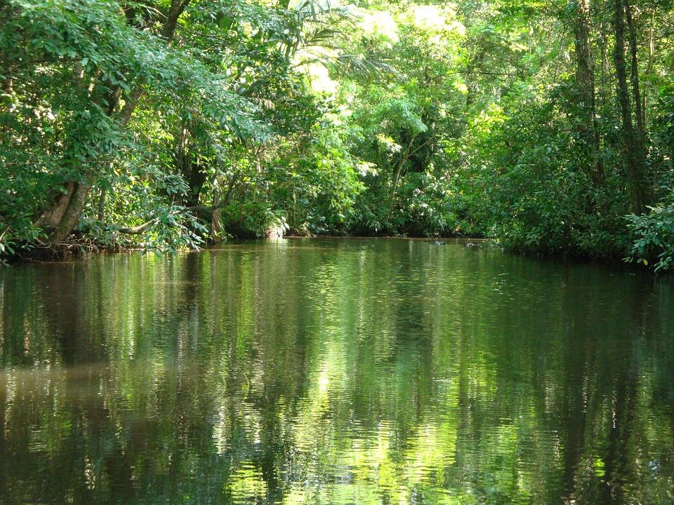 Costa Rica, Tortuguero, Jungle
