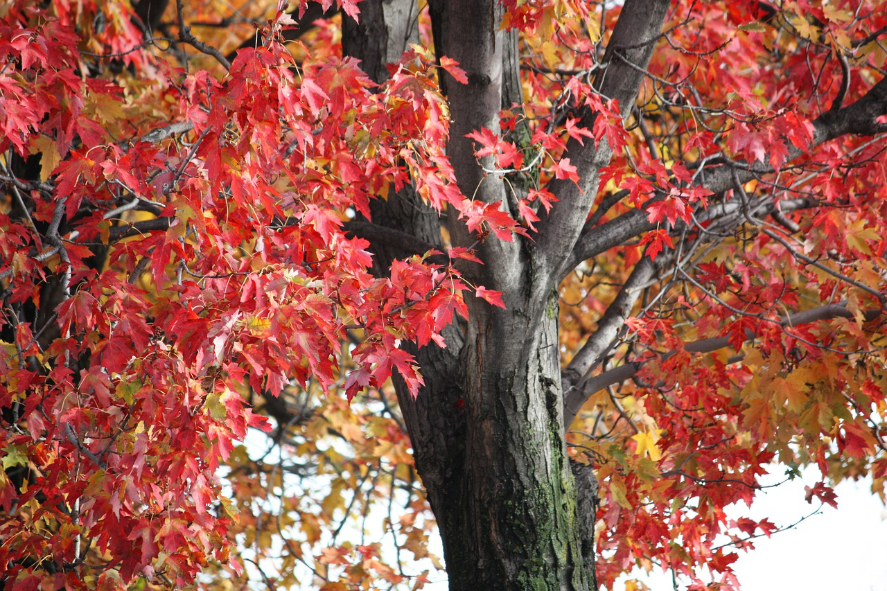 осенние листья и деревья фото первом этаже
