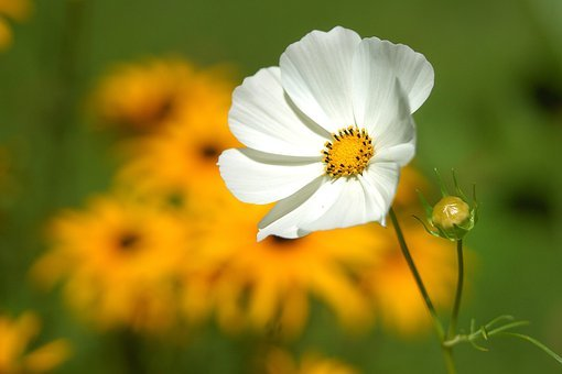 Flower, Macro, Nature, Bud, Flower