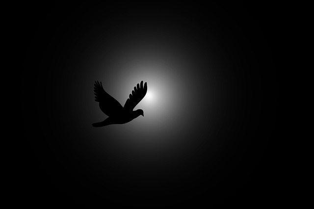 free illustration fly bird flying sky dark sun