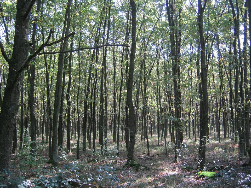 Bosque De Encino El Otono Emergen Foto Gratis En Pixabay