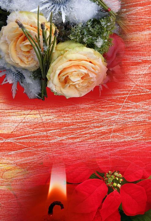 Ilustrace Zdarma Zimn 237 Květiny V 225 Noce Pozad 237 Obraz