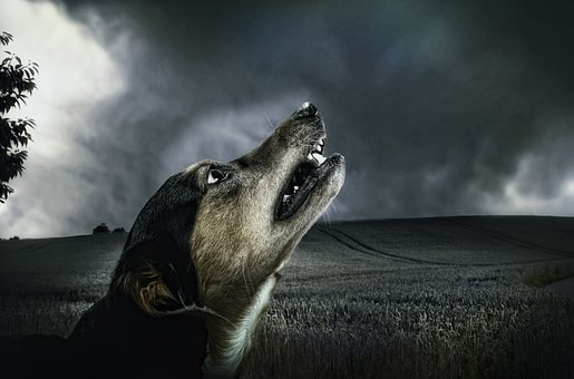 Dog, Dark, Howl, Moonlight, Animal, Fur