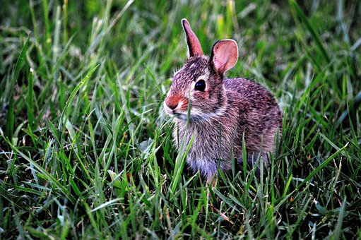 Bunny Rabbit Mammal Cute Animal Grass Outd