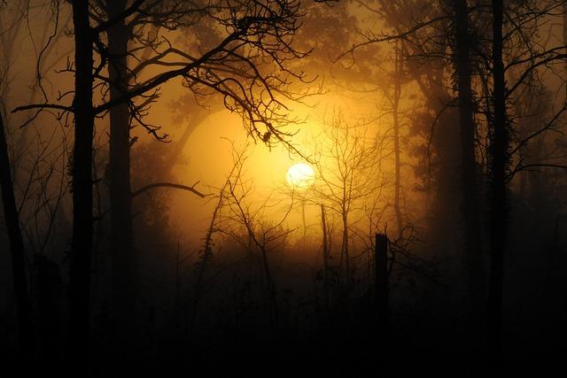 free photo woods forest nature wood sunset free
