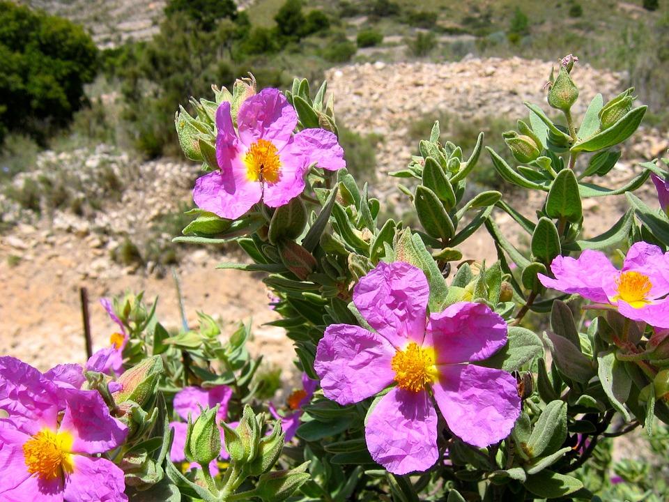 Flores Jara Estepa · Foto gratis en Pixabay