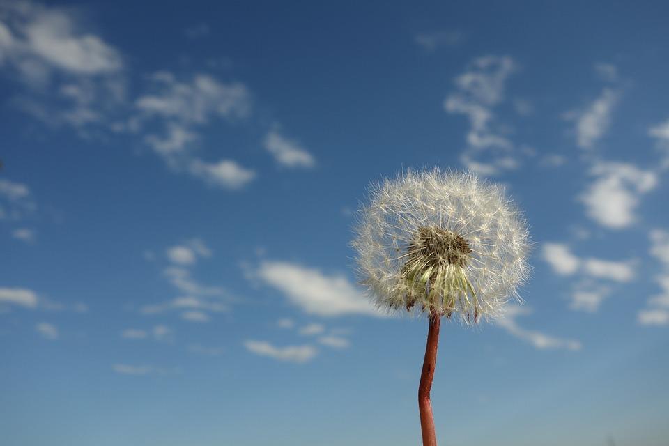 空, 雲, 青, 白, ふわふわ, 雲風景, 夏, スプリング, 冬, 秋, 太陽, 背景, 自然