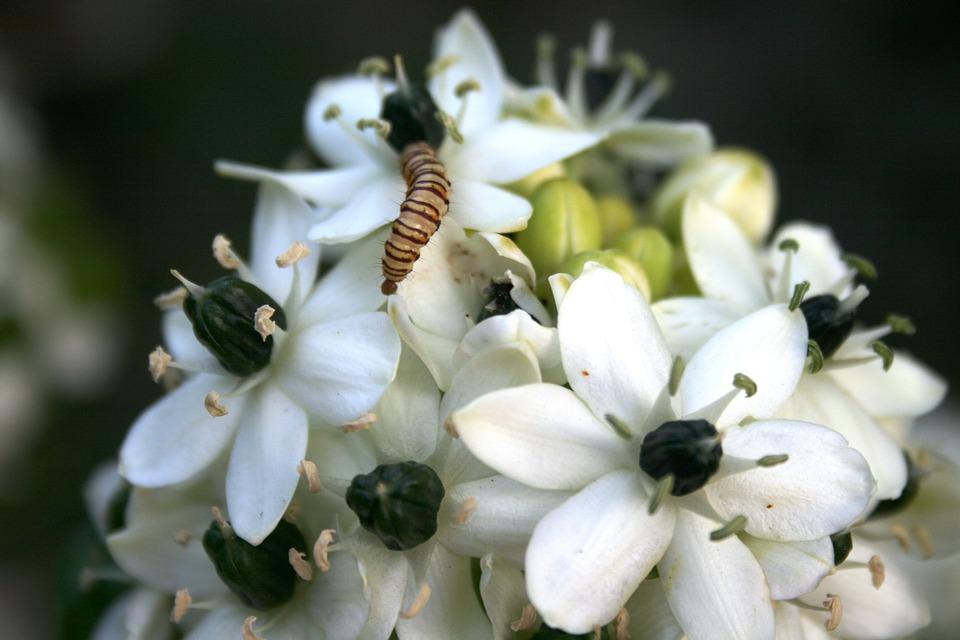 Flowers White Pretty Black Free Photo On Pixabay