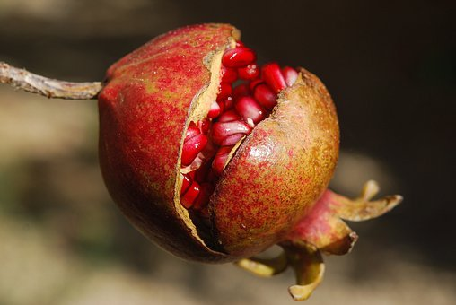 Pomegranate, Fruit, Flower, Exotic