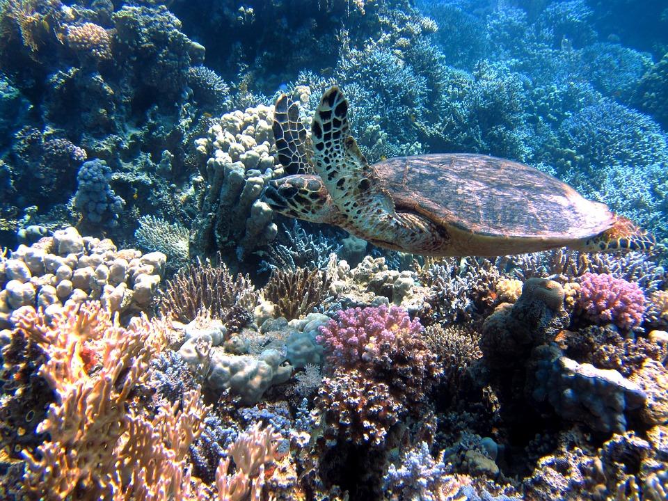 biología marina, coral, corales, arrecifes, vida marina, ecosistemas marinos