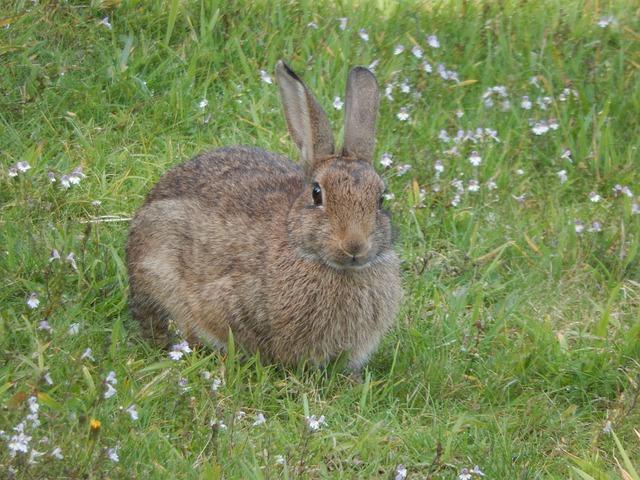 Wild Rabbit Animal 183 Free Photo On Pixabay