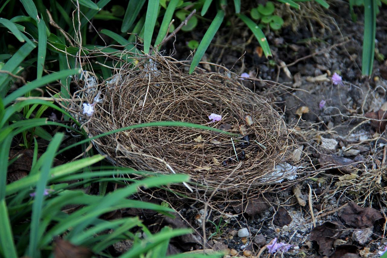Птицы с гнездами на земле