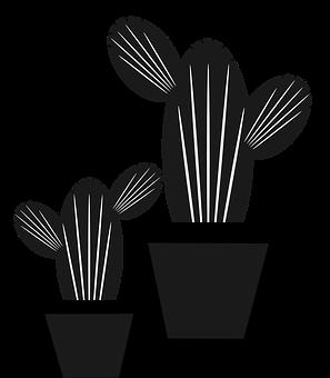 Kaktus Gambar Unduh Gambar Gambar Gratis Pixabay