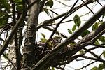 nest, empty, tree