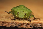 bug, wants, nature