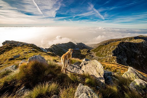 Dog, Mountain, Mombarone, Clouds
