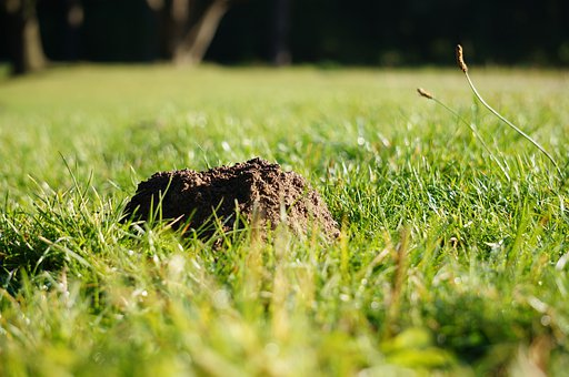 Molehill, Grass, Mole, Nature