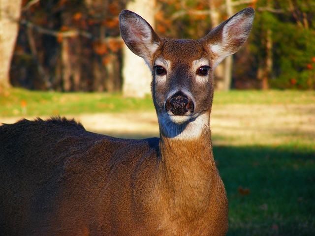 deer wildlife animals  u00b7 free photo on pixabay animal clip art free printable animal clip art free images