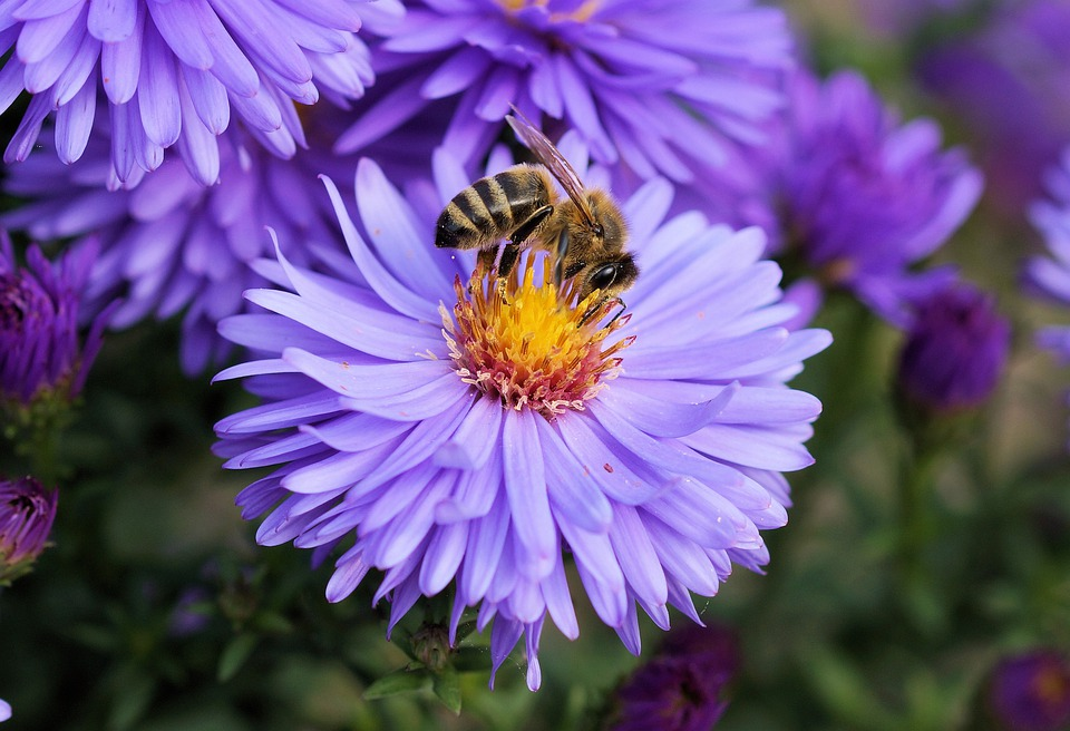 Bee, Flower, Pollen, Color, Blue, Purple, Orange