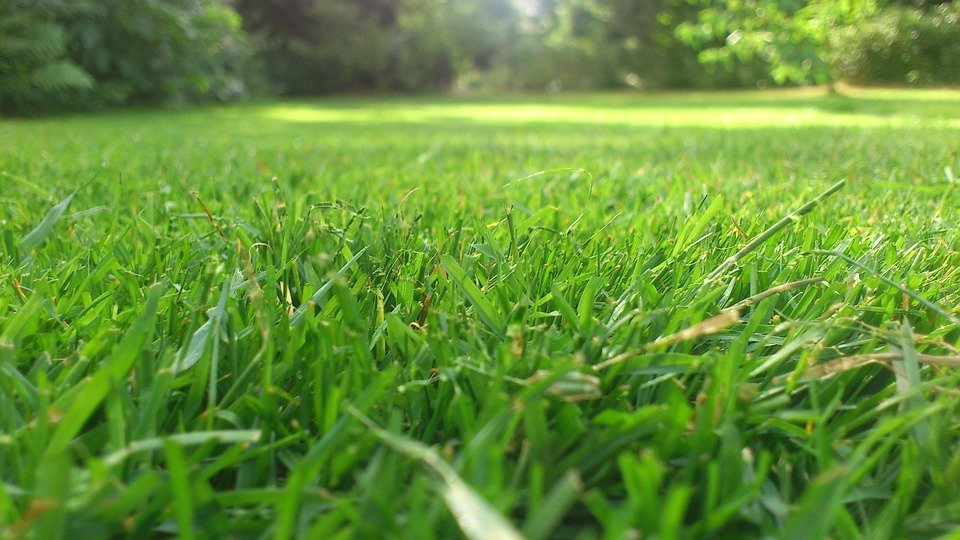 Tips For Mowing Your Lawn For a Striking Statement in The Garden 2