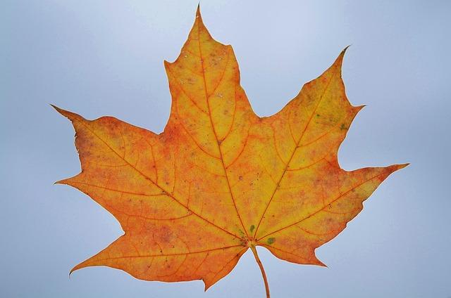free photo  leaf  nature  garden  macro  detail - free image on pixabay