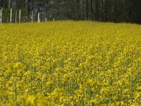 Wildflowers, Field, Flowers, Meadow