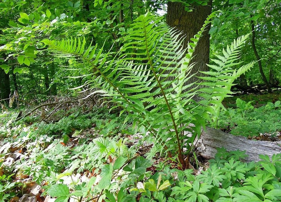 Nature, Forest, Forest Plants, Forest Plant, Plant