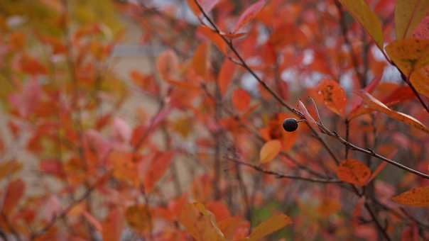 Autumn, Fall Colors, Journal Of The Bush