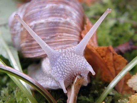 snail-193611__340.jpg