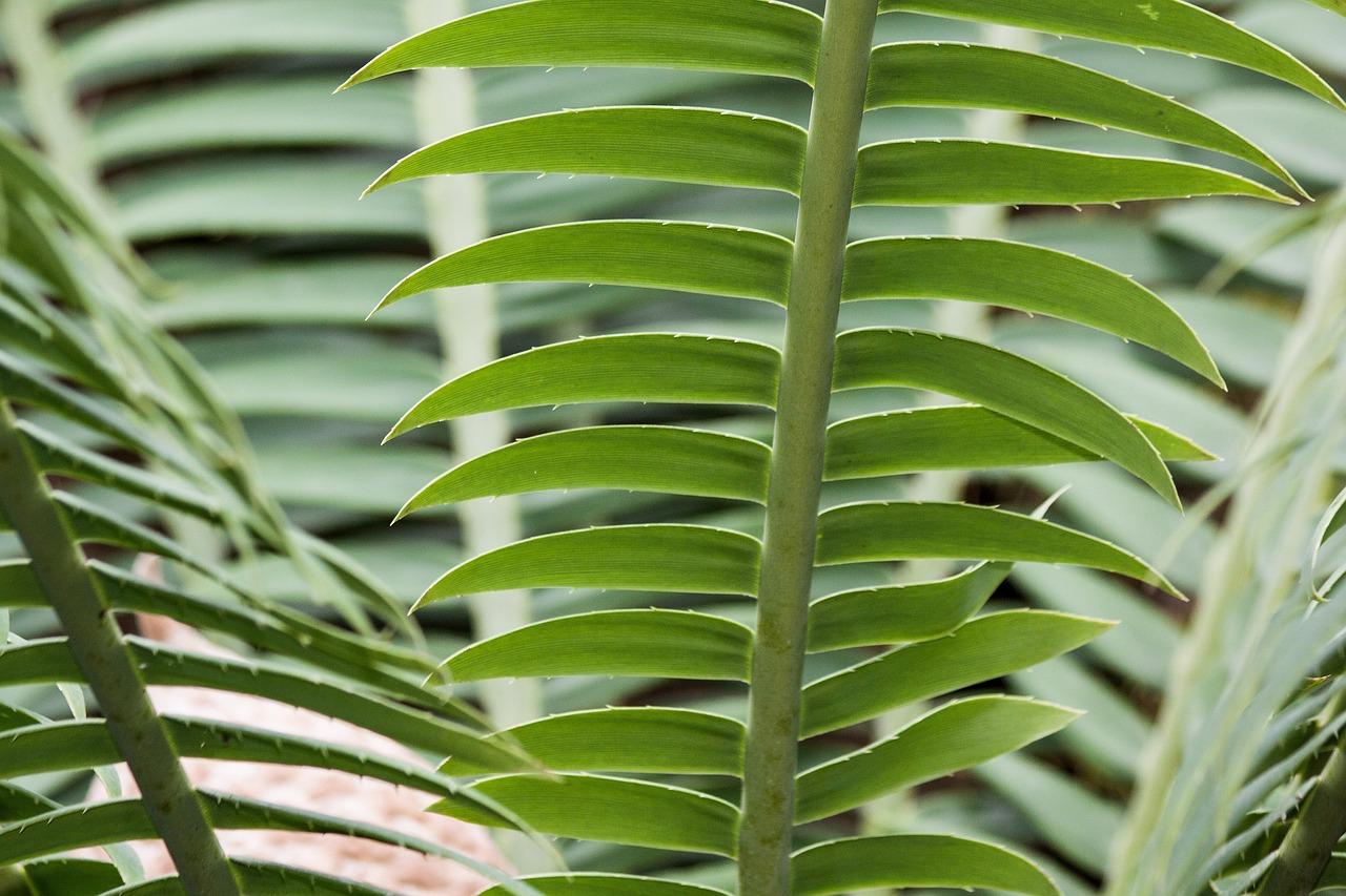 первой замия фото цветок любой