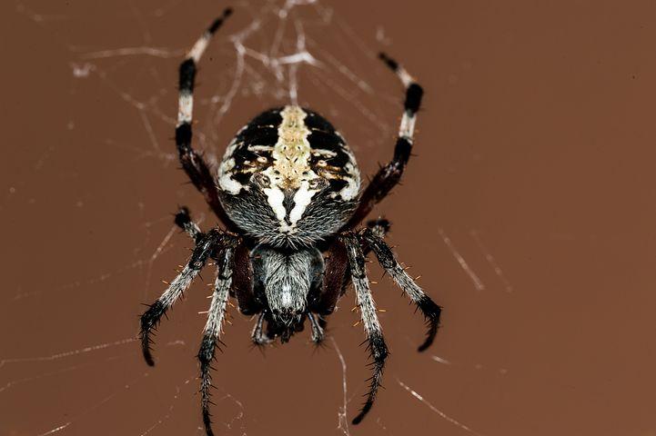К чему снится паук: толкование снов по известным сонникам фрейда, миллера, ванги и другие!