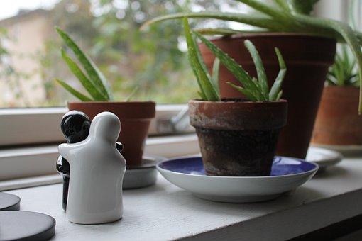Aloe Vera, Hug, Couple, Plant, Green