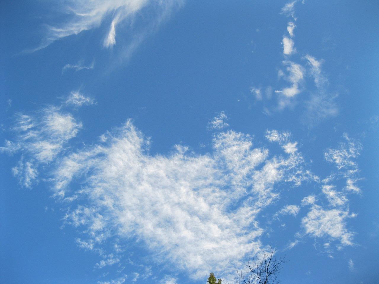 Голубой ара картинка музыка рулит