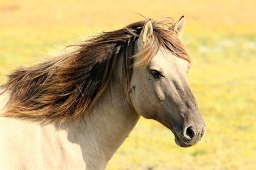 Horse Pasture Nature Animals Horse Horse H