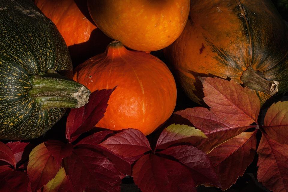 かぼちゃ, カボチャ, ウリ科, オレンジ, 大規模な, フルーツ, 栽培, 農業, 野菜, 収穫, 秋