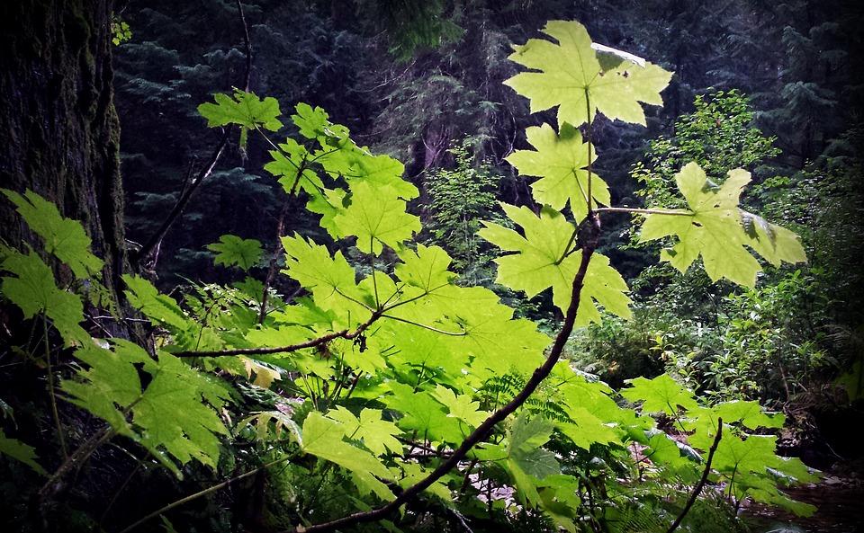 Photo gratuite Verdure, Des Forêts, Sous Bois  Image