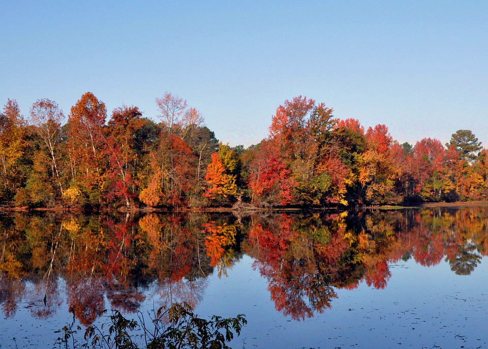 Pond Fall Serene 183 Free Photo On Pixabay