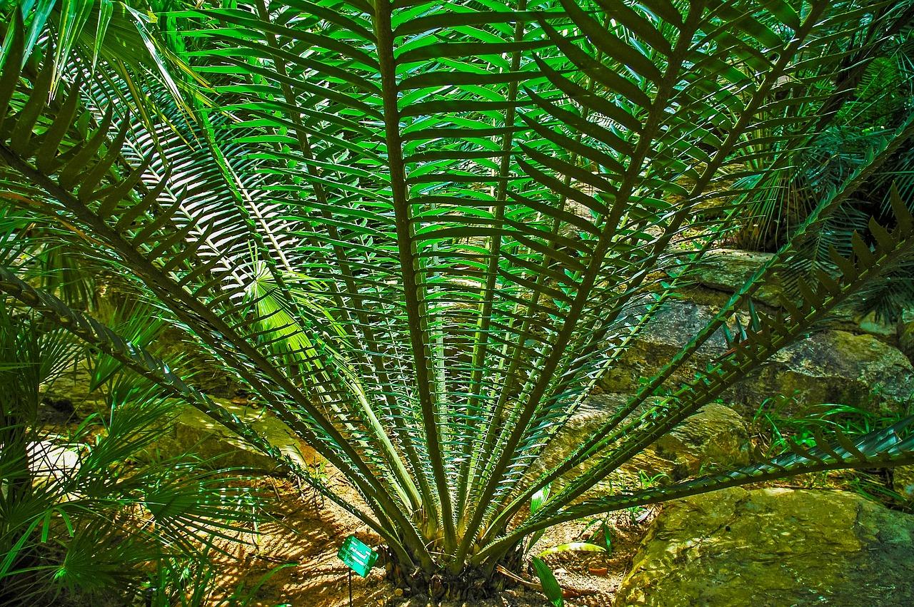 многие фото папоротники пальмы этот пейзаж
