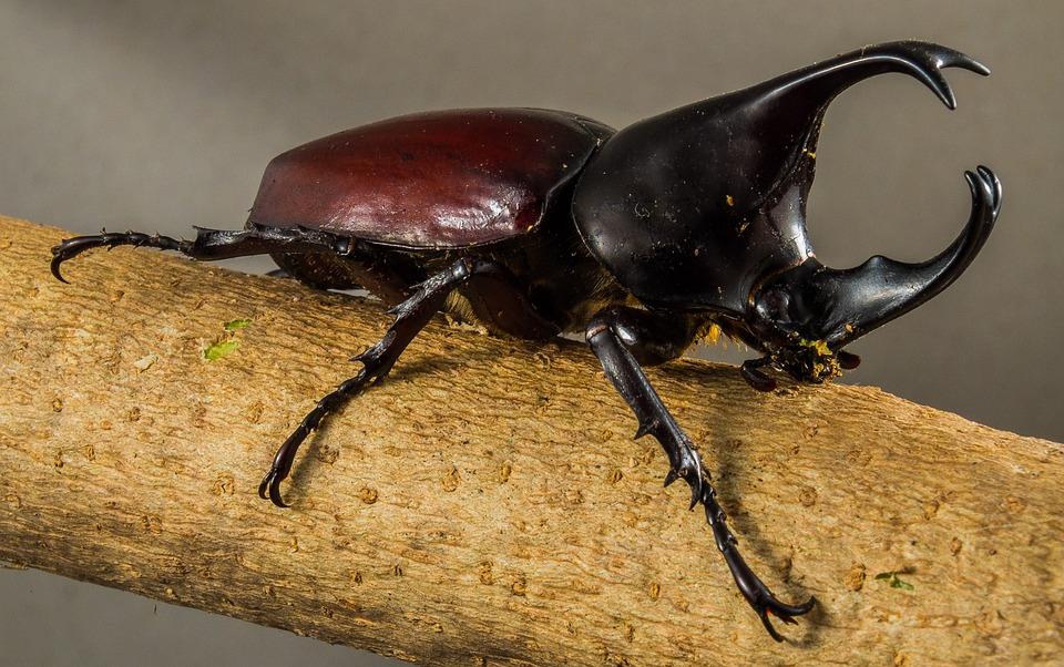 カブトムシの幼虫の育て方|育て方の基本とコツ/トラブルを防ぐ
