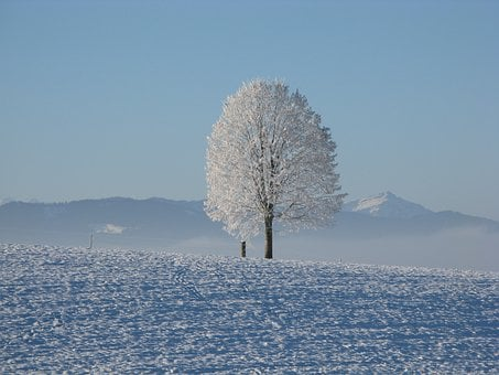 Winter, Snow, White, Cold, Sky, Tree