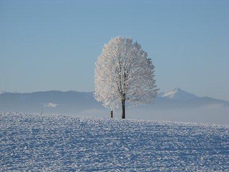 Winter, Snow, White, Cold, Sky, Tree