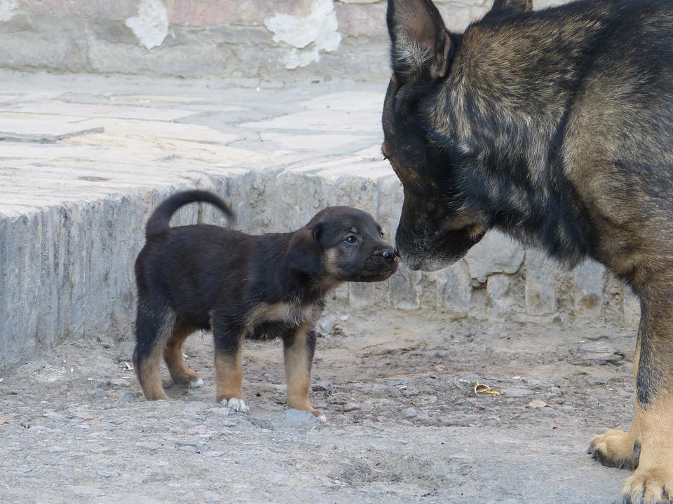 Dog, Puppy, Friendship, Taster, Small Dog, Snout, Head