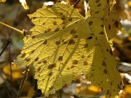 Foliage, Yellow, Leaves, Autumn, Fall