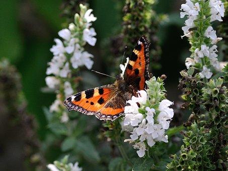 Papillon, Des Animaux