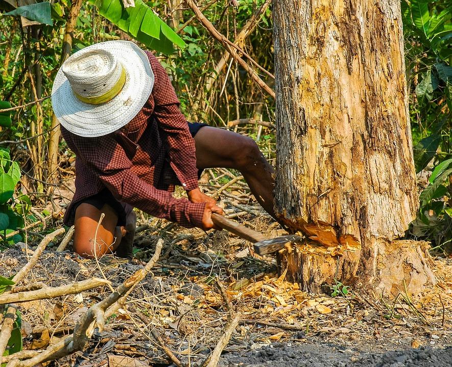 樵夫, 男子, 斧标驱风, 排气, 工作, 树, 爬, 例, 危险, 泰语, 木, 部落, 砍伐树木