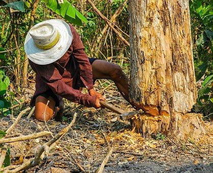 木を切るきこり