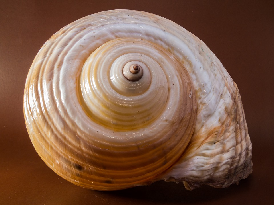Free Photo Shell Snail Close Free Image On Pixabay