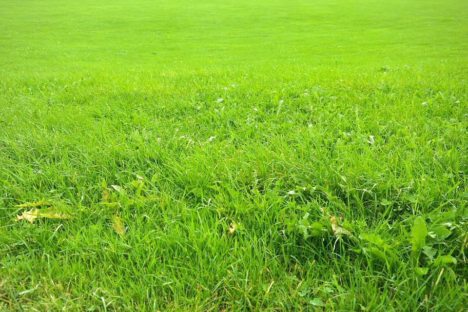 wallpaper ground grass